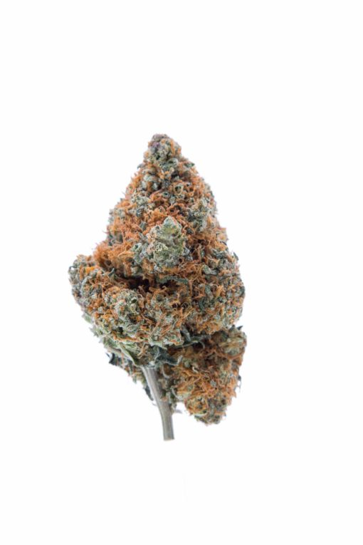 a long green bud with orange hairs