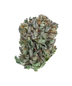 a green bud with purple accents