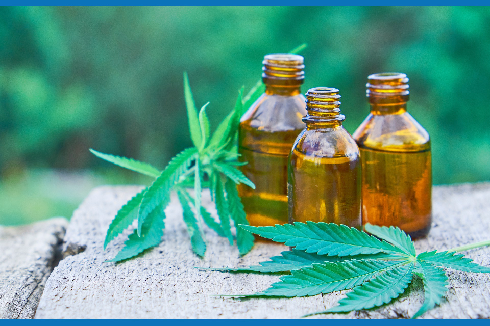 three bottles of cbd oil next to cannabis plant leaves outdoor